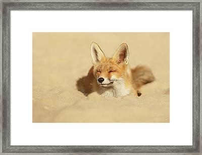 Zen Fox Series - Sandy Fox Framed Print