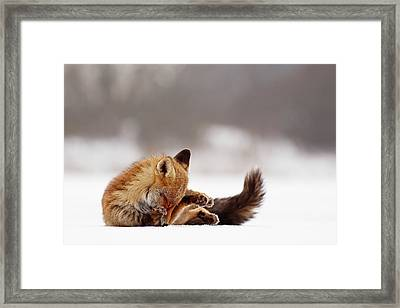 Zen Fox Series -shy Fox On Ice Framed Print