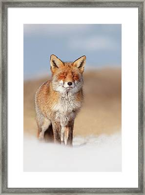 Zen Fox Series- Smiling Fox In The Snow Framed Print