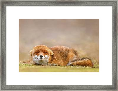 Zen Fox Series - Smiling Fox Is Smiling Framed Print by Roeselien Raimond