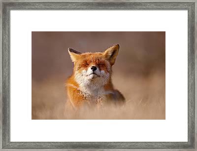 Zen Fox Series - Smiling Fox Framed Print by Roeselien Raimond