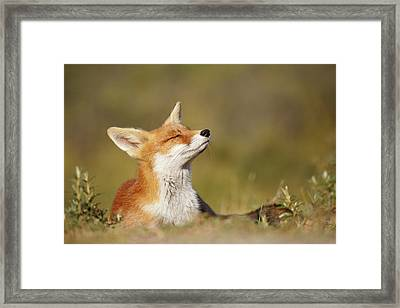 Zen Fox Series - Summer Fox Framed Print by Roeselien Raimond