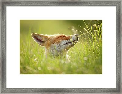 Zen Fox Series - Summer Zen Fox Framed Print by Roeselien Raimond