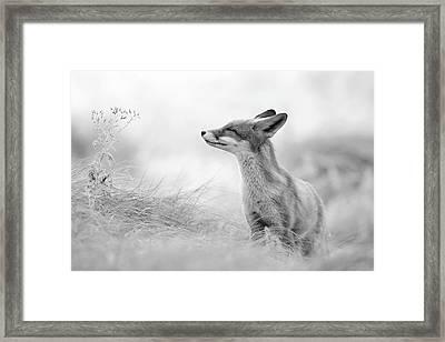 Zen Fox Series - Zen Fox In Black And White Framed Print by Roeselien Raimond