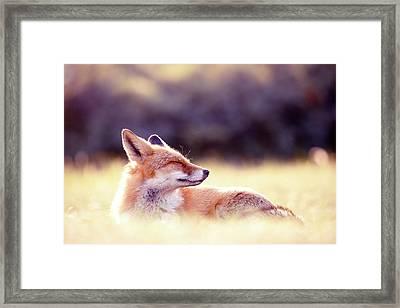 Zen Fox Series -zen Fox In Summer Mood Framed Print by Roeselien Raimond