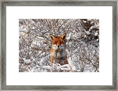 Zen Fox Series - Zen Fox In The Snow Framed Print by Roeselien Raimond