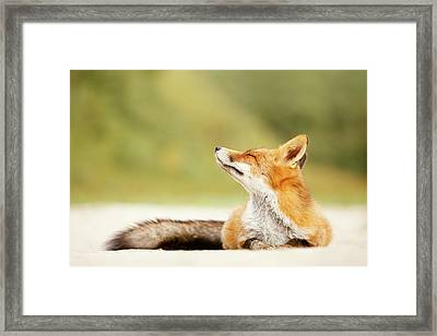 Zen Fox Series -zen Summer Fox Framed Print by Roeselien Raimond