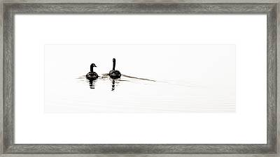 Zen Geese Framed Print by Bob Coates