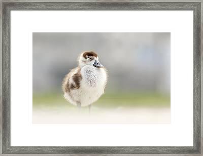 Zen Gosling Framed Print by Roeselien Raimond