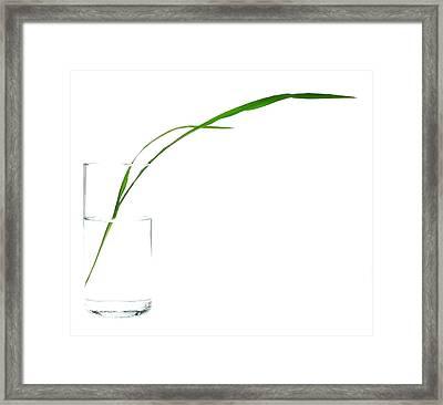 Zen Grass Framed Print by Mark Fuller