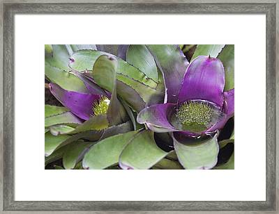 Zen Image Framed Print by Becca Buecher