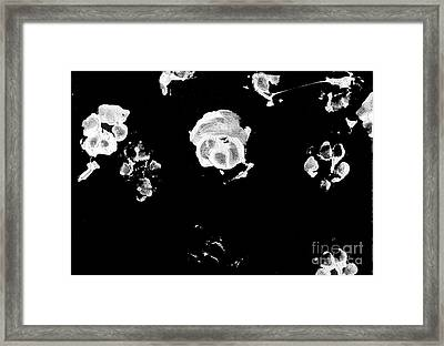 Zen Puppy IIi Framed Print by Antony Galbraith