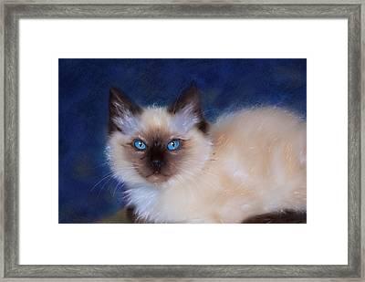 Zen Ragdoll Cat Framed Print by Michelle Wrighton