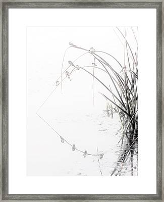 Zen Streamside Framed Print