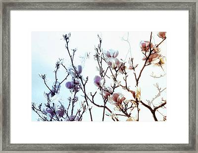 Framed Print featuring the photograph Zen Thoughts by Elaine Manley