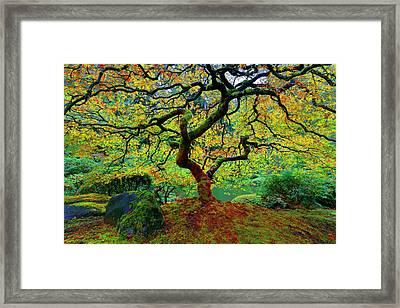Zentastick Framed Print by Jonathan Davison