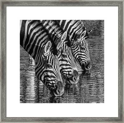 Framed Print featuring the photograph Zerba At The Watering Hole by Rand
