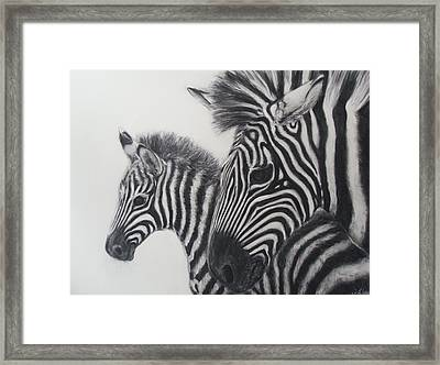 Zebras Framed Print by Adrienne Martino