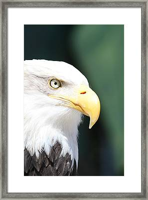 Zeroed In Framed Print