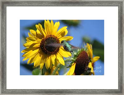 Zeroing In On The Subject Matter Framed Print by Cathy  Beharriell