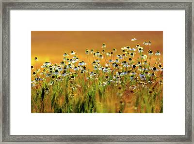Zest For Life Framed Print by Mah FineArt