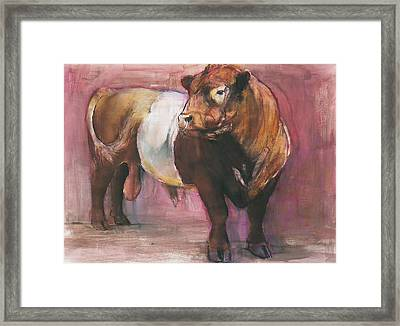 Zeus  Red Belted Galloway Bull Framed Print