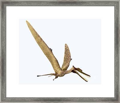 Zhenyuanopterus On White Framed Print