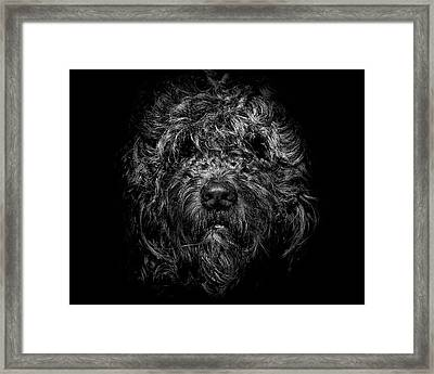 Framed Print featuring the photograph Ziggy Portrait No 1 by Brian Carson