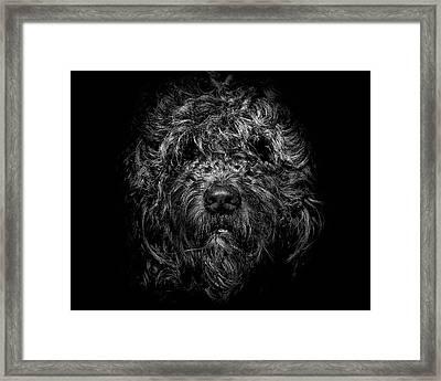 Ziggy Portrait No 1 Framed Print by Brian Carson