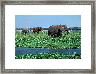 Zimbabwe-41-20 Framed Print by Craig Lovell