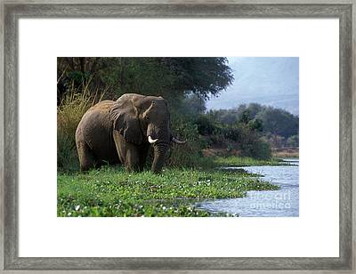 Zimbabwe_43-18 Framed Print by Craig Lovell
