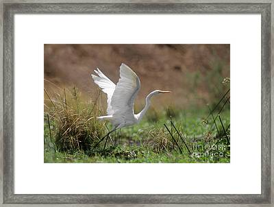 Zimbabwe_46-16 Framed Print by Craig Lovell