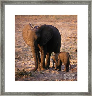 Zimbabwe_54-10 Framed Print by Craig Lovell