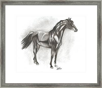 Zimmy Framed Print by Crystal Suppes