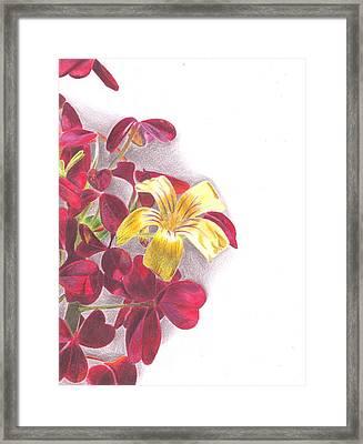 Zinfandel Framed Print by Chris Meyers
