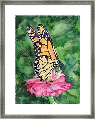 Zinnia And Monarch Framed Print