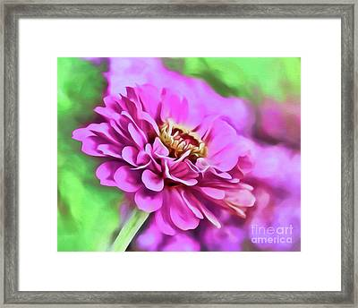Zinnia Art 2 Framed Print