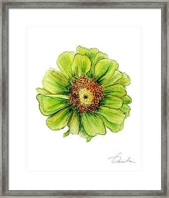 Zinnia Framed Print by Danuta Bennett
