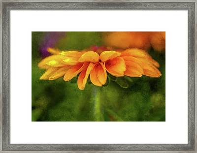 Zinnia Delight Framed Print