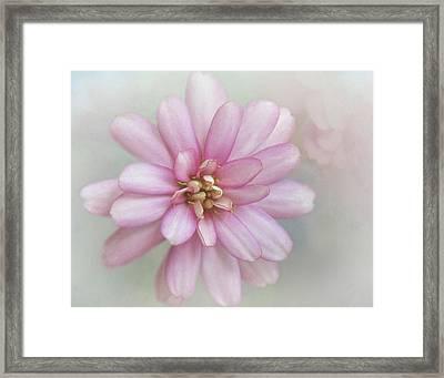 Zinnia Dream Framed Print