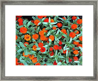 Framed Print featuring the photograph Zinnia Flower - Profusion Orange by Janine Riley