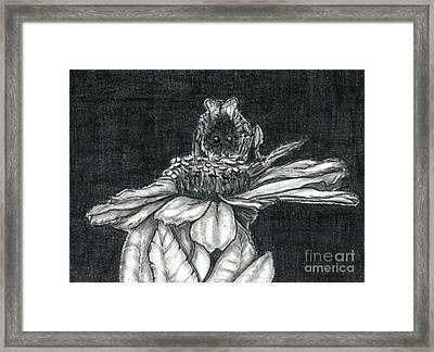 Zinnia Framed Print by Joy Neasley