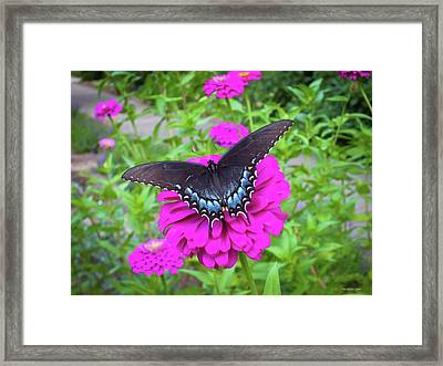 Zinnia Land Framed Print