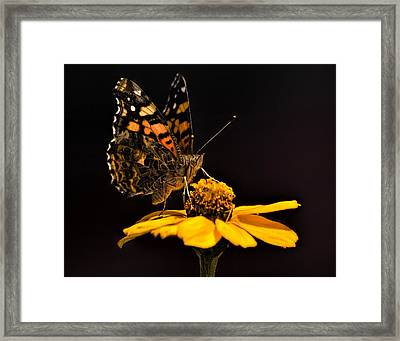 Zinnia Sipping Framed Print
