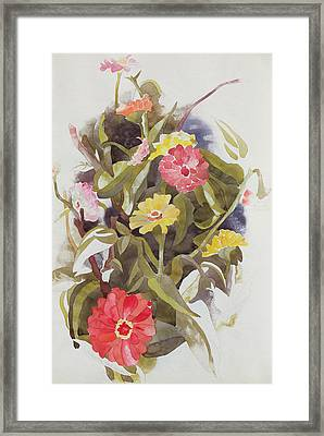 Zinnias Framed Print by Charles Demuth
