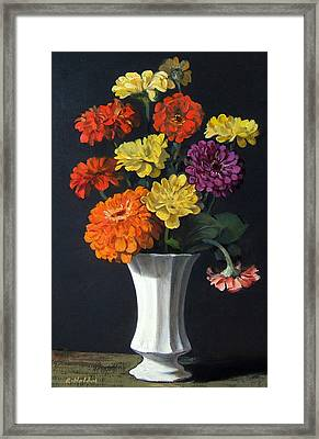 Zinnias Showing Their True Colors In White Vase Framed Print