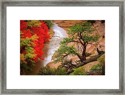 Zion After The Flood Framed Print by Inge Johnsson