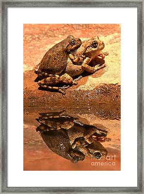 Zion Canyon Tree Frogs In Love Framed Print by Adam Jewell