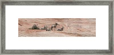 Zion Family Framed Print by Jim Cook