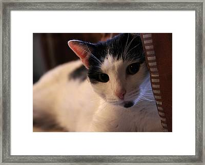 Zoe The Cat Framed Print by Brian Manfra